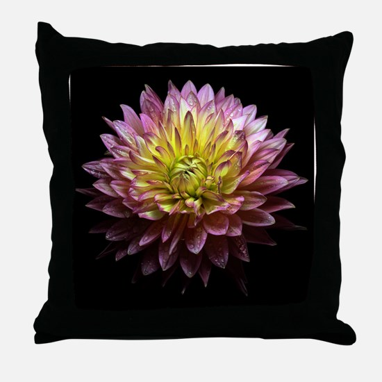 Dhalia with rain drops on black backg Throw Pillow