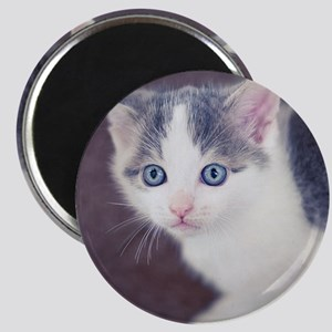 Kitten looking up with big blue eyes. Magnet