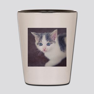 Kitten looking up with big blue eyes. Shot Glass