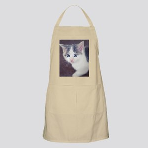 Kitten looking up with big blue eyes. Apron