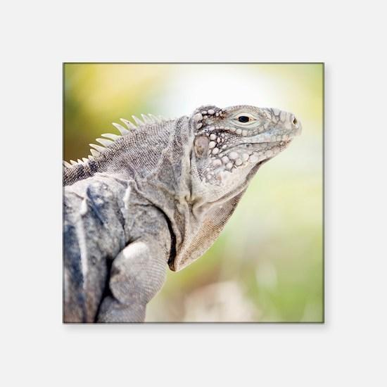 "Large green Iguana basking  Square Sticker 3"" x 3"""