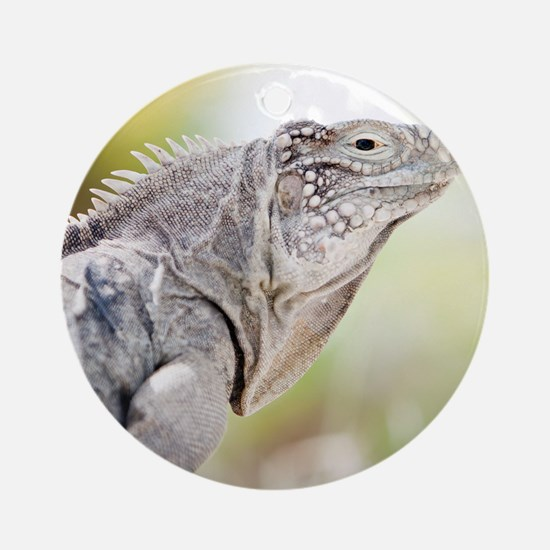 Large green Iguana basking in the s Round Ornament