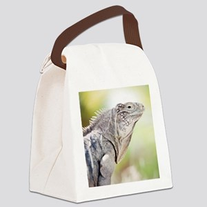 Large green Iguana basking in the Canvas Lunch Bag