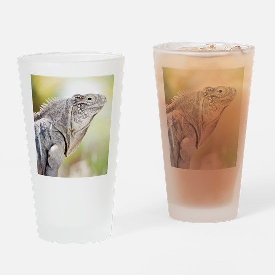 Large green Iguana basking in the s Drinking Glass