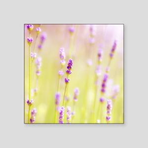 """Lavender field. Square Sticker 3"""" x 3"""""""