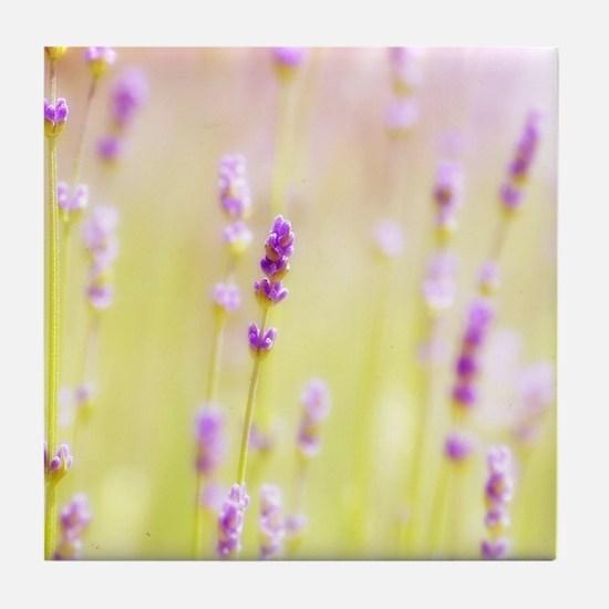 Lavender field. Tile Coaster