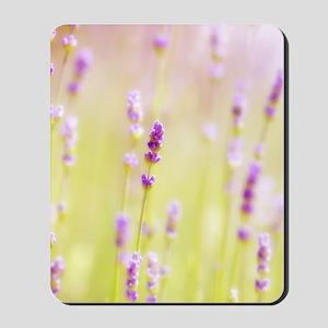 Lavender field. Mousepad