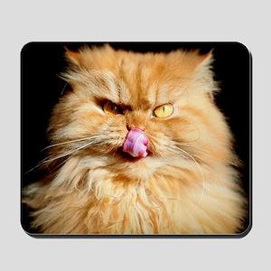Persian cat looking at camera and lickin Mousepad