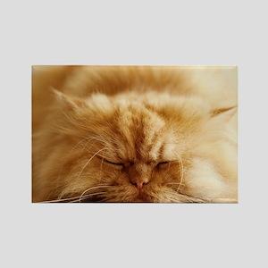 Persian cat sleeping on floor. Rectangle Magnet
