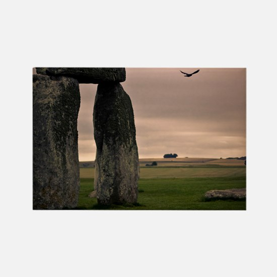 Picture of bird flying past Stone Rectangle Magnet