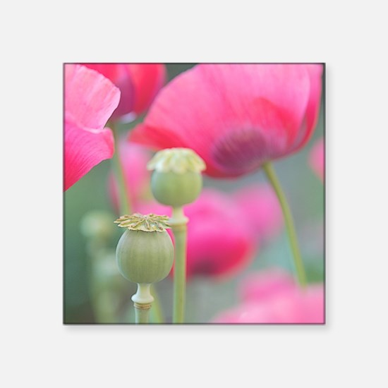 """Poppies, Bourges, France. Square Sticker 3"""" x 3"""""""