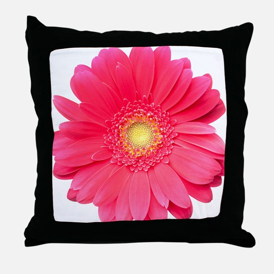 Pink gerbera daisy isolated on white. Throw Pillow