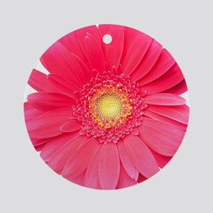 Pink gerbera daisy isolated on whit Round Ornament