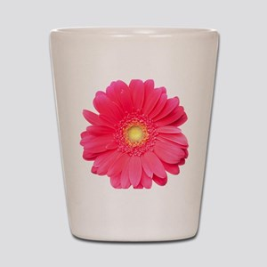 Pink gerbera daisy isolated on white. Shot Glass