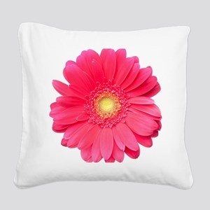 Pink gerbera daisy isolated o Square Canvas Pillow