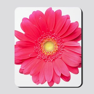 Pink gerbera daisy isolated on white. Mousepad