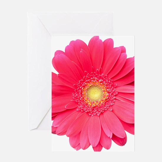 Pink gerbera daisy isolated on white Greeting Card