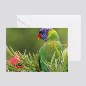 Rainbow Lorikeet, Kariong, Australia Greeting Card