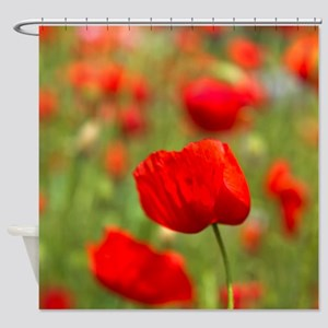 Red poppies in cornfield, France Shower Curtain