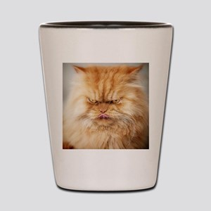 Persian cat looking angrily into camera Shot Glass