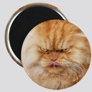 Persian cat looking angrily into camera and Magnet