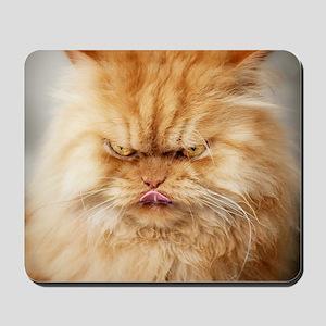 Persian cat looking angrily into camera  Mousepad