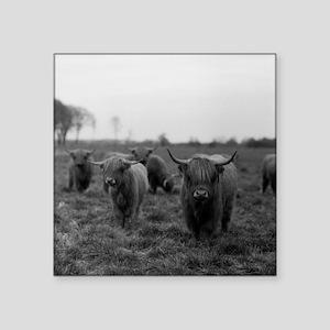 "Scottish highland cattle on Square Sticker 3"" x 3"""