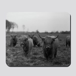 Scottish highland cattle on field, North Mousepad