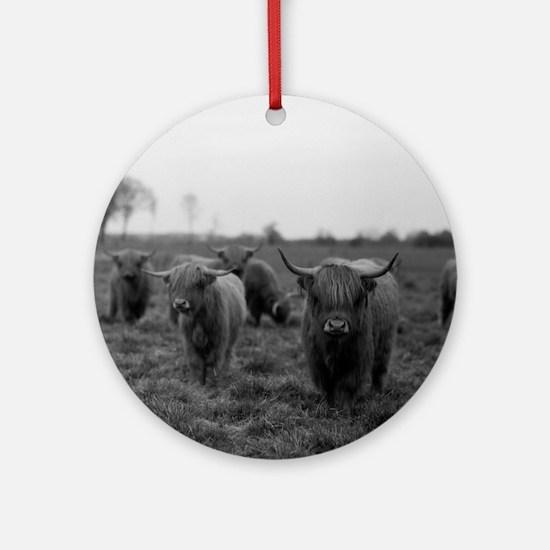 Scottish highland cattle on field,  Round Ornament