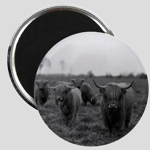 Scottish highland cattle on field, Northern Magnet
