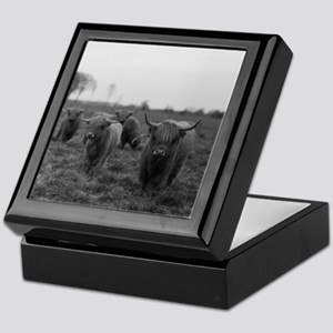 Scottish highland cattle on field, No Keepsake Box