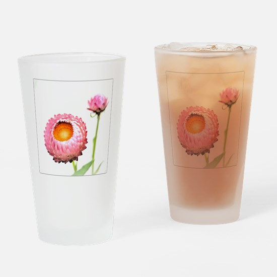 Pink Strawflowers, Japan Drinking Glass