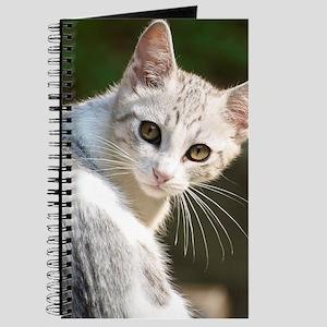 Portrait of kitten, Italy. Journal