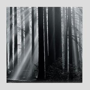 Sunlight in forest Tile Coaster