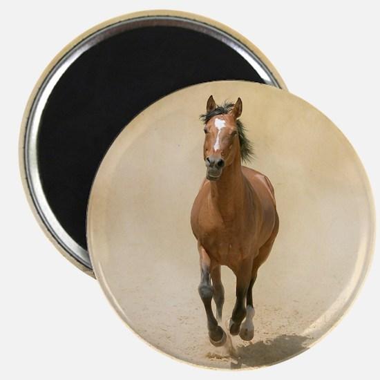 Shagya-Arabian horse cantering through dust Magnet