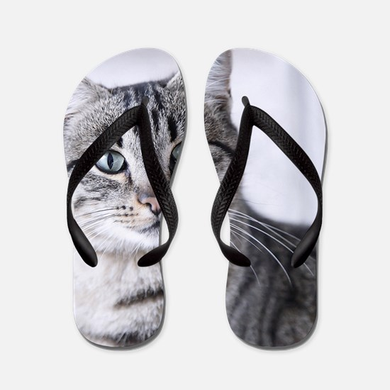 Tabby gray cat and green eyes. Flip Flops