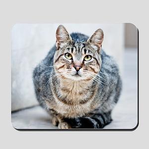 Street cat. Mousepad