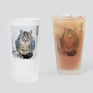 Street cat. Drinking Glass