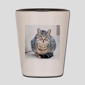 Street cat. Shot Glass