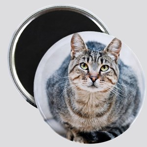 Street cat. Magnet