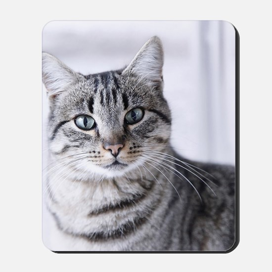 Tabby gray cat and green eyes. Mousepad