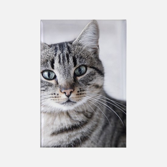 Tabby gray cat and green eyes. Rectangle Magnet