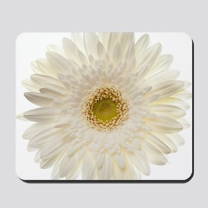 White gerbera daisy isolated on white. Mousepad
