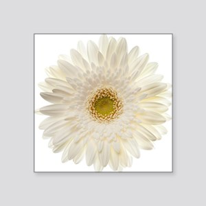 Gerbera daisy stickers cafepress white gerbera daisy isolate square sticker 3 mightylinksfo