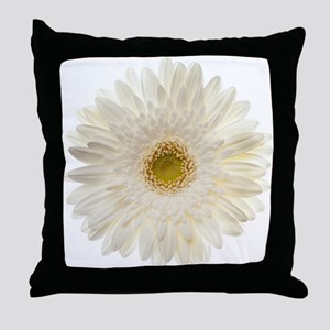 White gerbera daisy isolated on white Throw Pillow