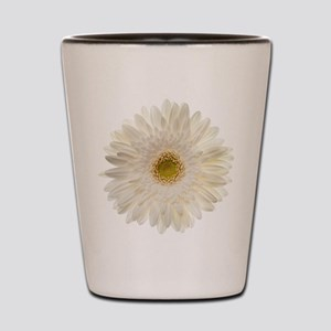 White gerbera daisy isolated on white. Shot Glass