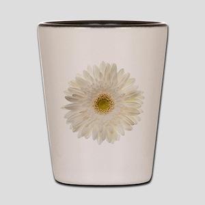 White gerbera daisy isolated on white. Shot Glass