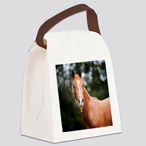 Young brown quarter horse eating  Canvas Lunch Bag
