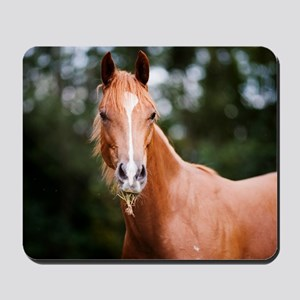 Young brown quarter horse eating grass. Mousepad