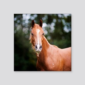 "Young brown quarter horse e Square Sticker 3"" x 3"""